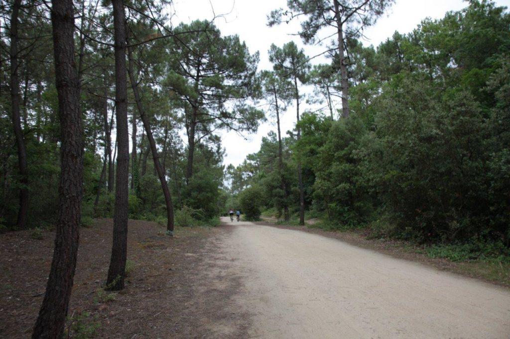 Forêt domaniale